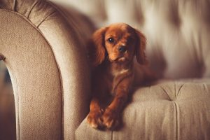 muebles amigables con mascotas